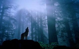 孤独的狼xp主题