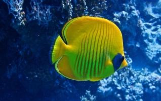 孤单的鱼xp主题