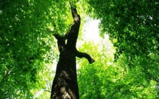 大树古树清新绿色风景桌面壁纸