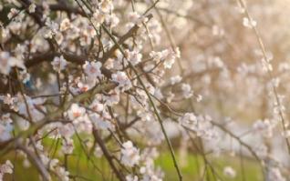 春天的花朵高清风景桌面壁纸