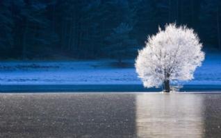 冬日阳光雪景高清桌面壁纸下载