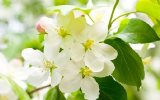 清新白色植物高清壁纸下载
