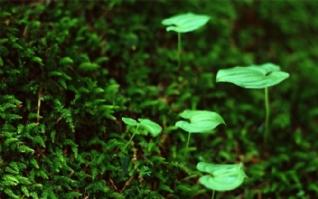 绿色清新植物图片壁纸下载