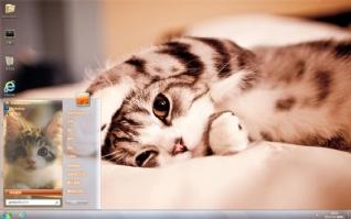 可爱萌猫win7桌面主题
