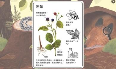小棕鼠的自然生态百科手机版下载